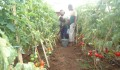 Agriculture School Project in Somalia Brings Results - 3