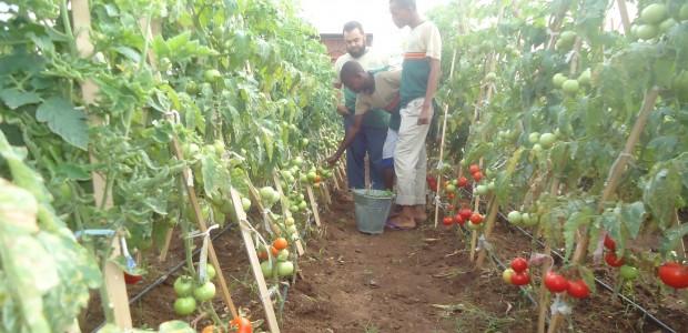 """Résultat de recherche d'images pour """"somalia, new agriculture"""""""