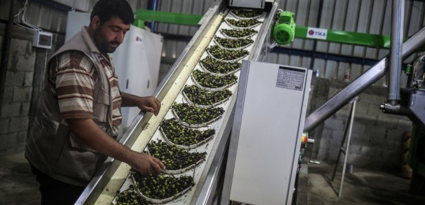 An Olive Oil Plant Built by TİKA Has Opened in the Gaza Strip - 8