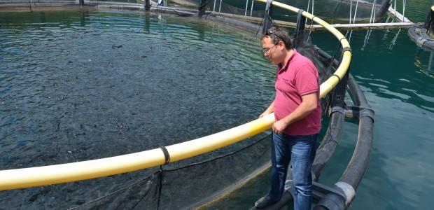 مشروع تطوير الثروة السمكية والموارد المائية في الجبل الاسود - 2