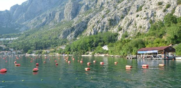 مشروع تطوير الثروة السمكية والموارد المائية في الجبل الاسود - 5