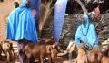 """دعم وتطوير قطاع الثروة الحيوانية في النيجر من قبل """"تيكا"""" التركية - 6"""