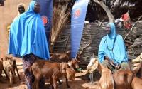 """دعم وتطوير قطاع الثروة الحيوانية في النيجر من قبل """"تيكا"""" التركية"""