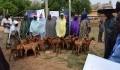 """دعم وتطوير قطاع الثروة الحيوانية في النيجر من قبل """"تيكا"""" التركية - 5"""