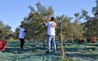 TİKA Offers Support for Olive Oil Production in Montenegro