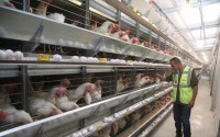 TİKA Built an Egg Poultry Facility in Palestine