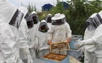 Kamerunlu Arıcılar Türkiye'de Modern Arıcılık Tekniklerini Öğreniyor