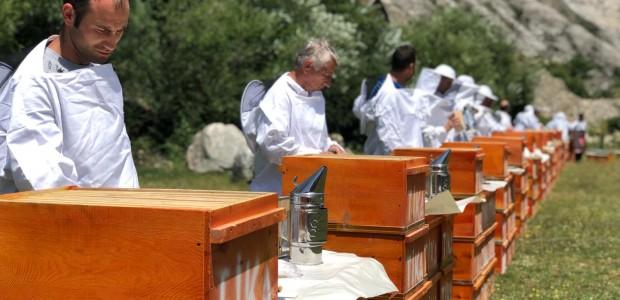 TİKA Develops Beekeeping in Macedonia  - 1