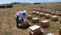 TİKA Develops Beekeeping in Macedonia  - 2
