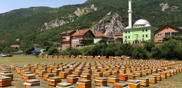 TİKA Develops Beekeeping in Macedonia  - 4