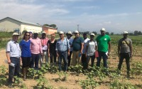 Training Support from TİKA to Mozambique on Cotton Farming