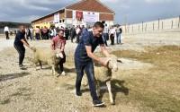TİKA'dan Kosovalı Çiftçilere Destek
