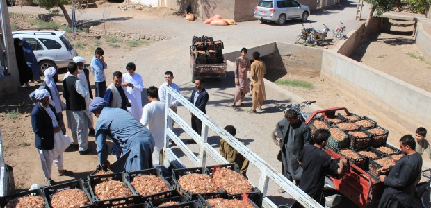 TİKA Supports Farmers in Afghanistan  - 1