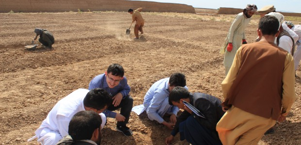 TİKA Supports Farmers in Afghanistan  - 4