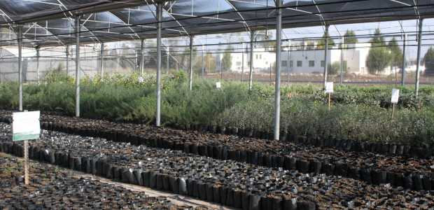 TİKA Opens Sapling Production Facility in Palestine - 3