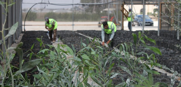 TİKA Opens Sapling Production Facility in Palestine - 6
