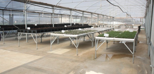 TİKA Opens Sapling Production Facility in Palestine - 7
