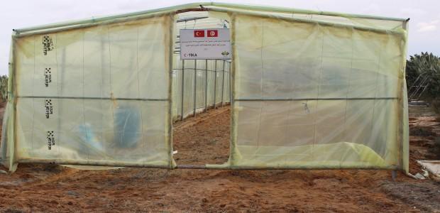 تيكا التركية تدعم زراعة ستيفيا (نبتة السكر) في سيدي بوزيد التونسية - 3