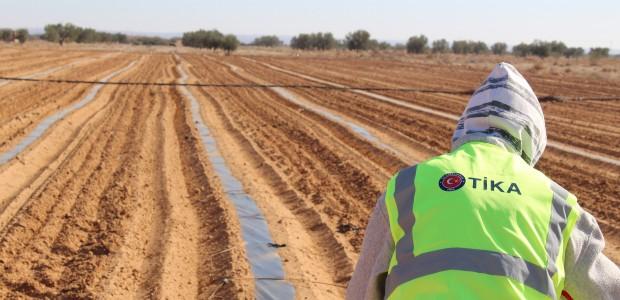 TİKA'dan Tunuslu Çiftçilere Destek  - 1