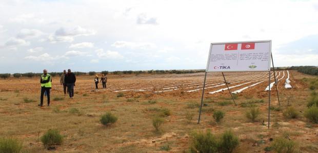 تيكا التركية تدعم زراعة ستيفيا (نبتة السكر) في سيدي بوزيد التونسية - 4