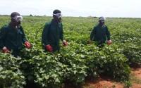 TİKA'dan Mozambikli Çiftçilere Destek