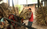 Agricultural Support To Colombia