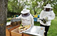 TİKA Supports the Beekeeping Industry in Kosovo