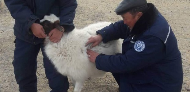 TİKA supports veterinarians in Mongolia - 2