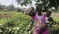 TİKA Provides Employment Opportunities in Agriculture to Guinean Women - 1