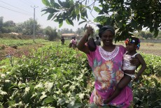 TİKA Provides Employment Opportunities in Agriculture to Guinean Women