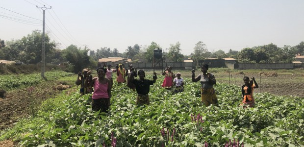 TİKA Provides Employment Opportunities in Agriculture to Guinean Women - 2