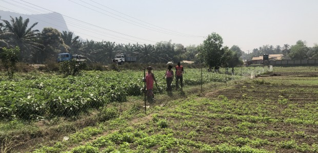 TİKA Provides Employment Opportunities in Agriculture to Guinean Women - 3