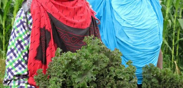 تيكا التركية تدعم المزارعين في صوماليلاند  - 2