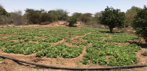 تيكا التركية تدعم المزارعين في صوماليلاند  - 5