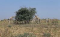 TİKA'dan Nijer'de Doğal Yaşama Destek