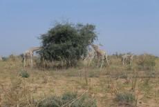 TİKA Supports Natural Life in Niger