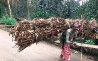 TİKA'dan Etiyopya'da Odun Taşıyan Kadınlar Derneğine Destek