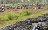 تيكا التركية تساهم في إنتاج البن العربي في غينيا