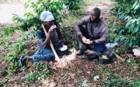 Batı Afrika Ülkesi Gine'de Kahve Üreticilerine Destek