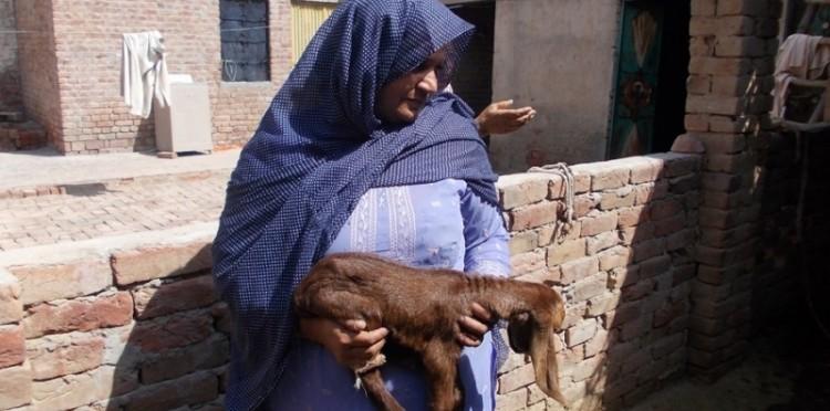 Pakistan'da Keçi Yetiştiriciliği İlk Meyvesini Verdi
