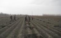 Özbekistan'da Tarımsal Kalkınma Projelerine Örnek: Kavak Yetiştiriciliği