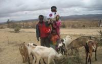 TİKA'dan Etyopya'ya Sürdürülebilir Bir Proje: Keçi Yetiştiriciliği