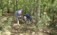 Arnavutluk'ta Orman Zararlıları ile Biyolojik Mücadele Projesi Başladı