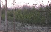 Özbekistan'da Kavak Yetiştiriciliği TİKA ile Büyüyor