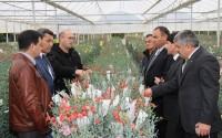 Türkiye Seracılık Uygulamaları Konusundaki Tecrübelerini Türkmenistan ile Paylaşıyor