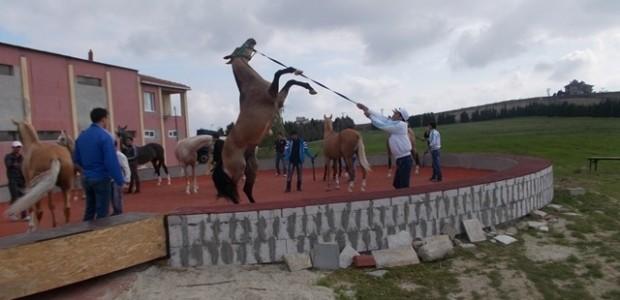 Ahalteke Atlarının Dünyaya Tanıtılmasına Destek   - 2