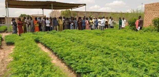 Burkina Faso'da 100 Bin Moringa Oleifera Ağacı Yetiştirilmesi Projesi'nin Üçüncü Aşamasına Geçildi  - 3