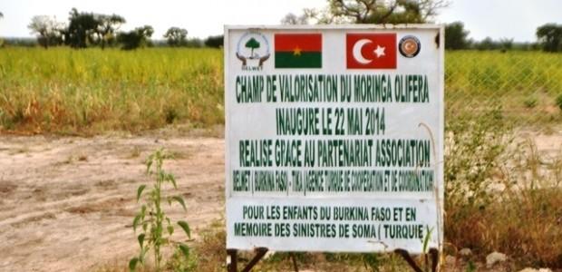 Burkina Faso'da 100 Bin Moringa Oleifera Ağacı Yetiştirilmesi Projesi'nin Üçüncü Aşamasına Geçildi  - 2