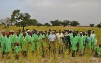 Burkina Faso'da 100 Bin Moringa Oleifera Ağacı Yetiştirilmesi Projesi'nin Üçüncü Aşamasına Geçildi