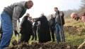 TİKA Bosna Hersek Vakıf Arazilerinde Ceviz Ağacı Dikiyor  - 4